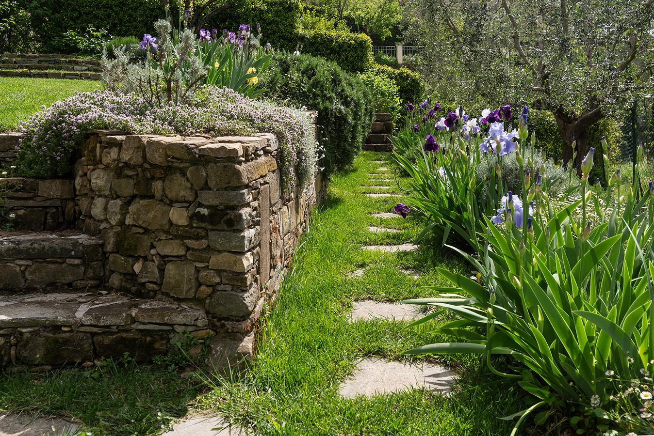 Iris in fiore ai bordi dei camminamenti in pietra