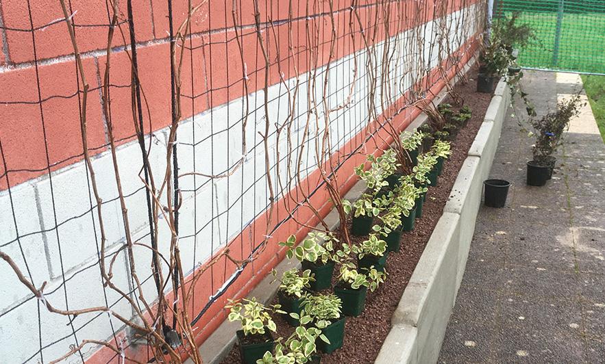 pareti-verdi-scuola-firenze
